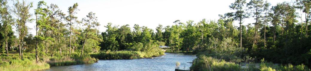 bayou2